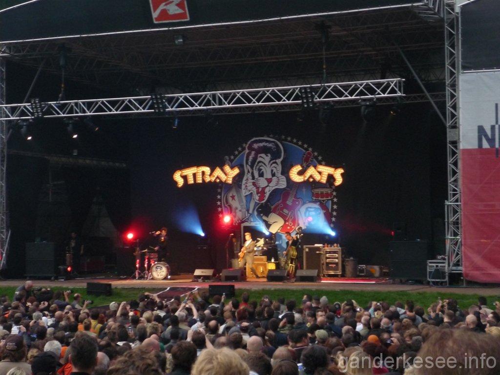 stray-cats-hamburg-2008-04