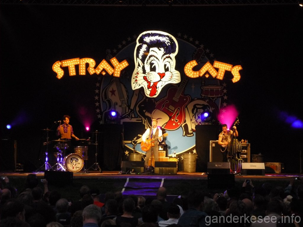 stray-cats-hamburg-2008-05