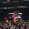 stray-cats-hamburg-2008-04