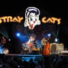 stray-cats-hamburg-2008-06